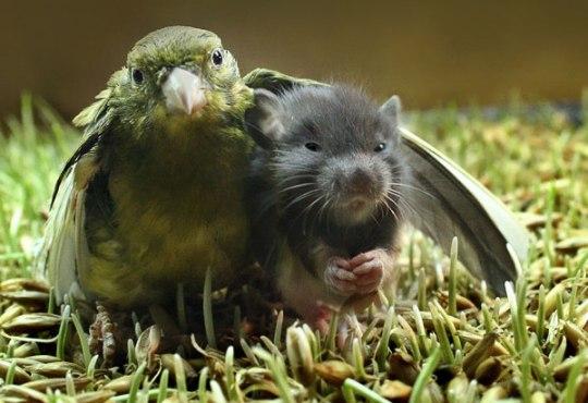 birdmouse