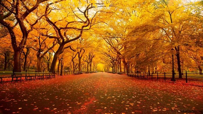 Central-Park-New-York-Autumn-3264