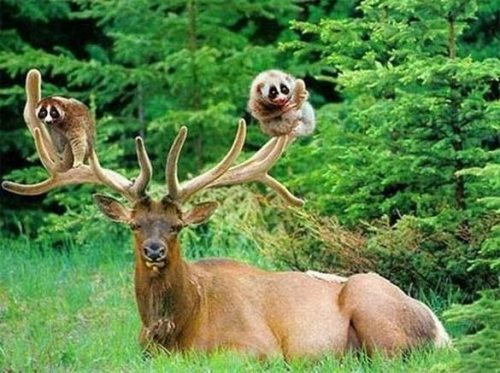 unlikely-animal-friendships-alliances-6